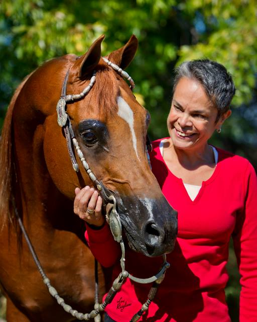 Discovering the Arabian Horse