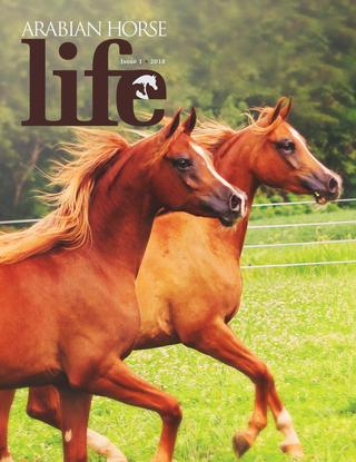 Domestic-Bred Arabians: Some ABCs for CMK